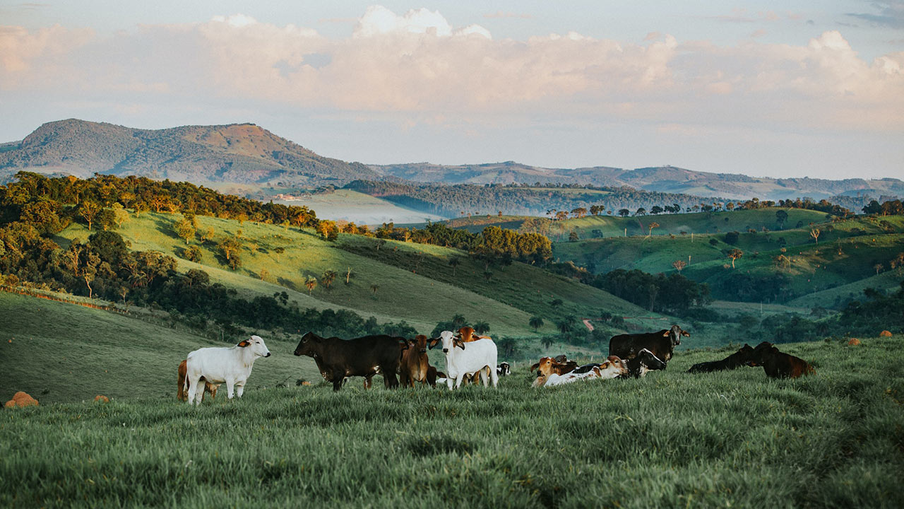 Analytics For Dairy Producers